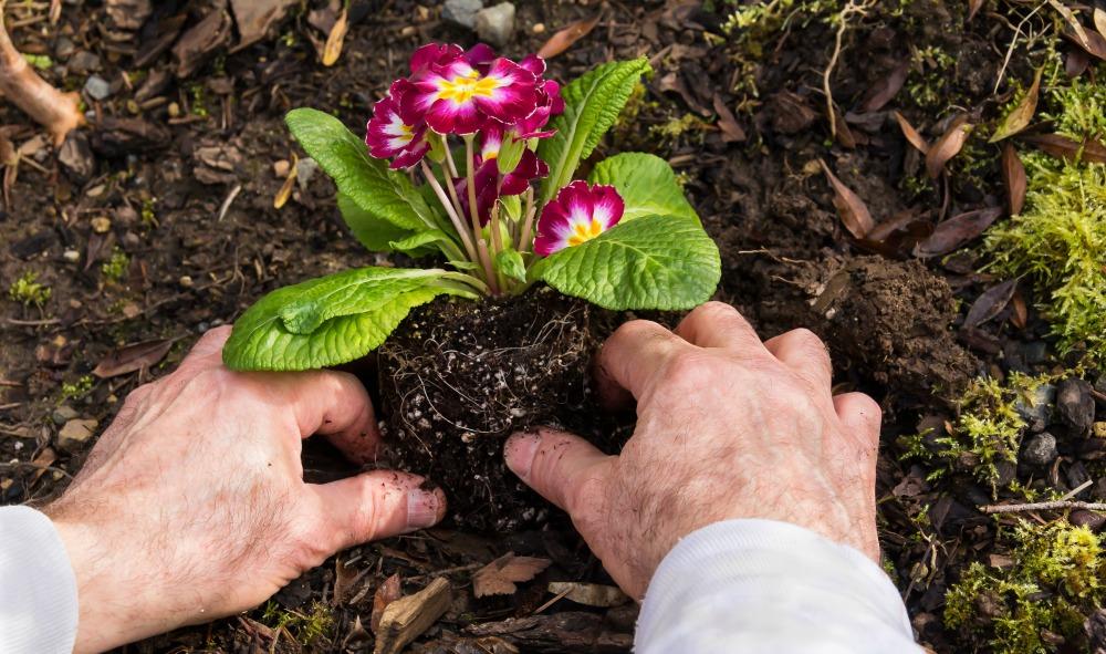 pain-free-gardening-jpg-5431a6415e13c967c98a5b1af585e431